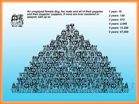 Be the Solution Spay Neuter Your Dog Tallahassee
